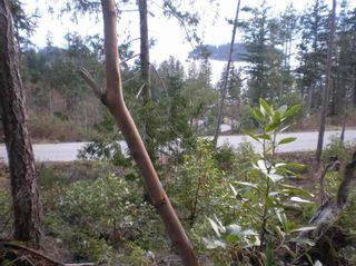 Photo 8: LOT 105 JOHNSTON HEIGHTS ROAD in Sunshine Coast: Home for sale : MLS®# R2244687