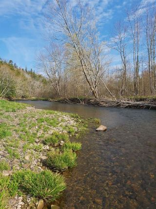 Photo 3: Lot Piedmont Valley Road in Avondale: 108-Rural Pictou County Vacant Land for sale (Northern Region)  : MLS®# 202114568