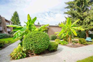 """Photo 25: 213 3921 CARRIGAN Court in Burnaby: Government Road Condo for sale in """"LOUGHEED ESTATES"""" (Burnaby North)  : MLS®# R2587532"""