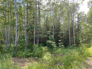 Photo 3: 38 Stewart Road in Lyons Brook: 108-Rural Pictou County Vacant Land for sale (Northern Region)  : MLS®# 202011938