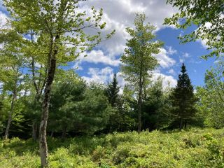 Photo 7: Lot 29 Anderson Drive in Sherbrooke: 303-Guysborough County Vacant Land for sale (Highland Region)  : MLS®# 202115631