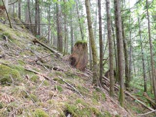 Photo 5: 10630 Tilly Rd in Port Alberni: PA Sproat Lake Land for sale : MLS®# 879576