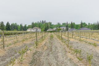 Photo 37: 1436 HOPE Road in Abbotsford: Poplar House for sale : MLS®# R2602794