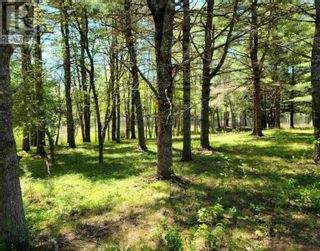 Photo 4: Medway River Road in Bangs Falls: Vacant Land for sale : MLS®# 202122898
