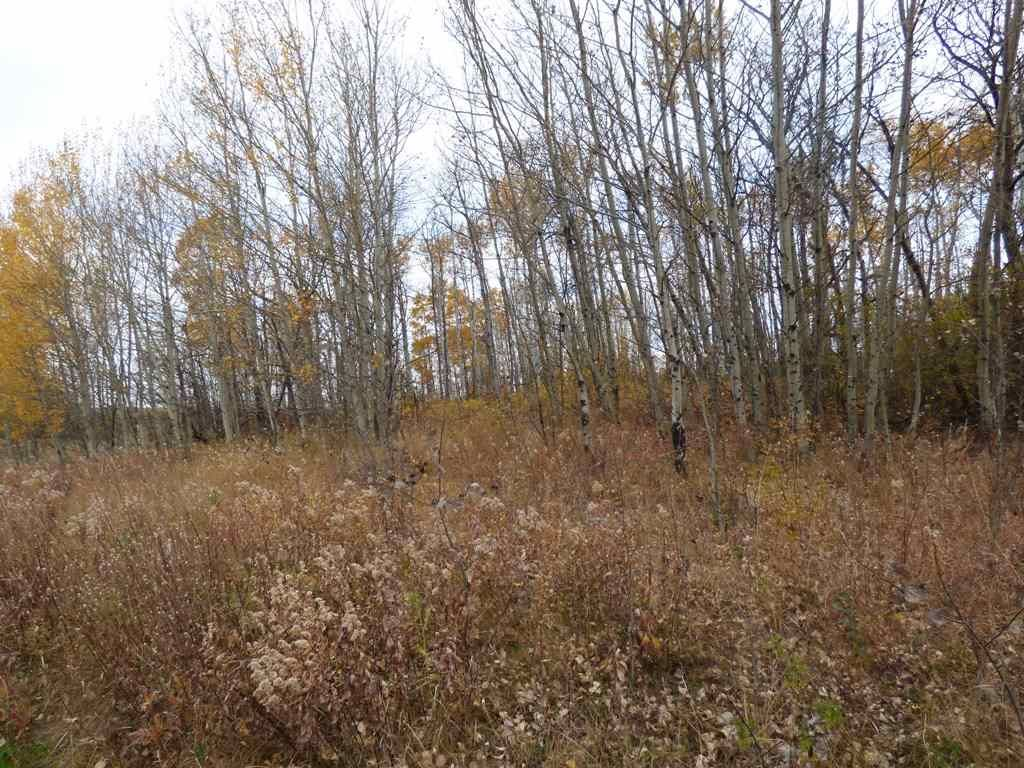 Photo 16: Photos: N1/2 SE19-57-1-W5: Rural Barrhead County Rural Land/Vacant Lot for sale : MLS®# E4217154