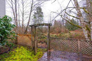 Photo 31: 24098 109 Avenue in Maple Ridge: Cottonwood MR House for sale : MLS®# R2544574