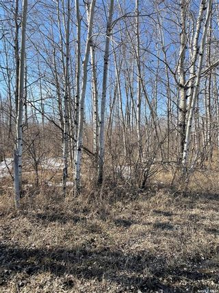 Photo 17: 65 acres land in Preeceville: Lot/Land for sale : MLS®# SK848653