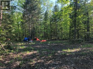 Photo 9: N/A RANEY Road E in Sundridge: Vacant Land for sale : MLS®# 40129602