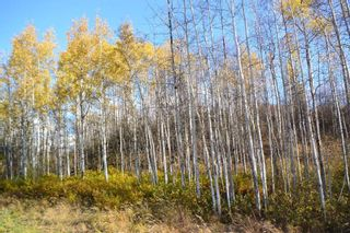 """Photo 4: Lot 5 OLD BABINE LAKE Road in Smithers: Smithers - Rural Land for sale in """"Driftwood"""" (Smithers And Area (Zone 54))  : MLS®# R2625264"""