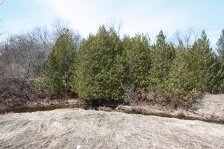 Photo 6: 2nd Line in Roseneath: Land Only for sale : MLS®# 188329