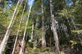 "Photo 15: LOT D 5680 CARMEL Place in Sechelt: Sechelt District Land for sale in ""TUWANEK"" (Sunshine Coast)  : MLS®# R2524461"