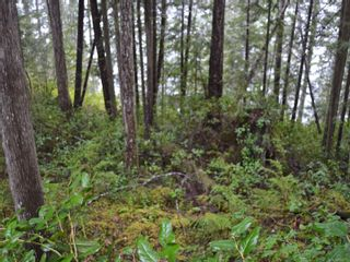 Photo 14: 1309 Gorge Harbour Rd in : Isl Cortes Island Land for sale (Islands)  : MLS®# 868715