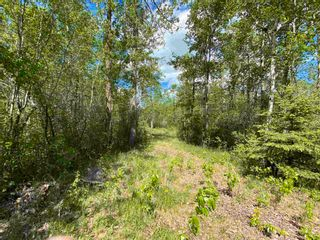 Photo 4: N/W Corner Rang 204 & Twp Rd 510: Rural Strathcona County Rural Land/Vacant Lot for sale : MLS®# E4247043
