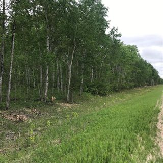 Photo 3: 0 84N Road in Brokenhead Rm: Vacant Land for sale : MLS®# 202001618