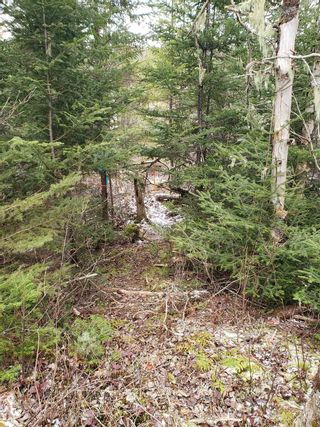 Photo 11: Lots Melrose Country Harbour Road in Country Harbour: 303-Guysborough County Vacant Land for sale (Highland Region)  : MLS®# 202102147