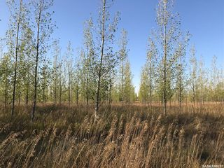 Photo 14: Greenfield Section RM 158 in Edenwold: Farm for sale (Edenwold Rm No. 158)  : MLS®# SK848878