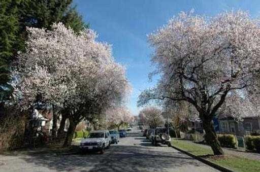 Photo 6: Photos: 935 E 13TH AV in : Mount Pleasant VE House for sale : MLS®# V525794