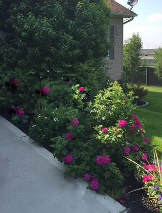 Photo 38: 2902 Drake Drive: Cold Lake House for sale : MLS®# E4237860