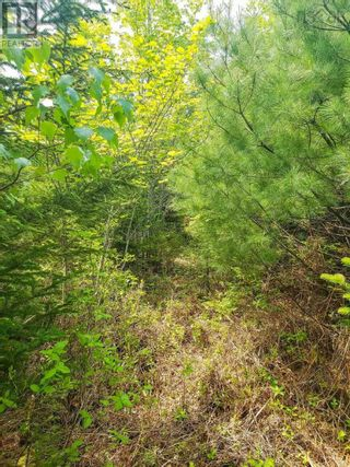 Photo 7: Lot 101 Dorey Mills Road in Clearland: Vacant Land for sale : MLS®# 202119645