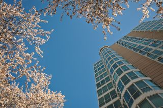 """Photo 1: 1204 1111 HARO Street in Vancouver: West End VW Condo for sale in """"ELEVEN ELEVEN HARO"""" (Vancouver West)  : MLS®# V876639"""