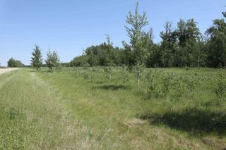 Photo 4: TWP 494 RR 42: Rural Leduc County Rural Land/Vacant Lot for sale : MLS®# E4252228