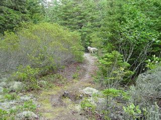 Photo 22: 0 Moshers Island Road in LaHave River: 405-Lunenburg County Vacant Land for sale (South Shore)  : MLS®# 202111805