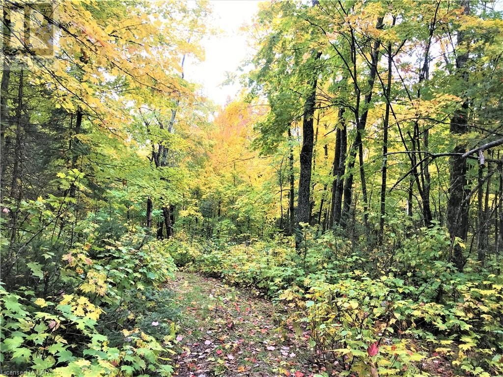 Main Photo: 0 OTTAWA Avenue in South River: Vacant Land for sale : MLS®# 40156406