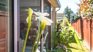 Photo 25: 66 2600 Ferguson Rd in : CS Turgoose Row/Townhouse for sale (Central Saanich)  : MLS®# 877790