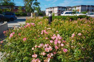 Photo 33: 103 1018 Inverness Rd in : SE Quadra Condo for sale (Saanich East)  : MLS®# 881817