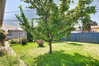 Photo 46: 48 DOVERTHORN Place SE in Calgary: Dover Detached for sale : MLS®# A1023255