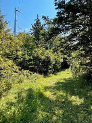 Photo 5: 1373 West Sable Road in Sable River: 407-Shelburne County Vacant Land for sale (South Shore)  : MLS®# 202122222