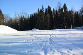 Photo 4: LOT A W 16 Highway in Smithers: Smithers - Town Land for sale (Smithers And Area (Zone 54))  : MLS®# R2533470