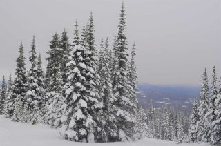 """Photo 14: 217 PRAIRIE Road in Smithers: Smithers - Rural Land for sale in """"Hudson Bay Mountain Resort"""" (Smithers And Area (Zone 54))  : MLS®# R2545464"""
