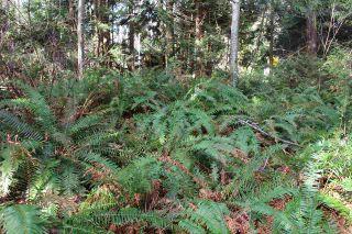 Photo 4: 5852 MARINE Way in Sechelt: Sechelt District Land for sale (Sunshine Coast)  : MLS®# R2545877