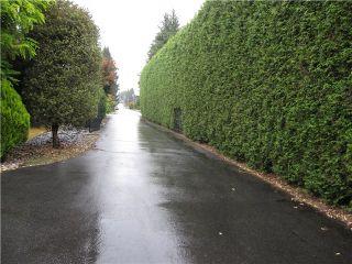 Photo 14: 20115 PATTERSON Avenue in Maple Ridge: Southwest Maple Ridge House for sale : MLS®# V1136191
