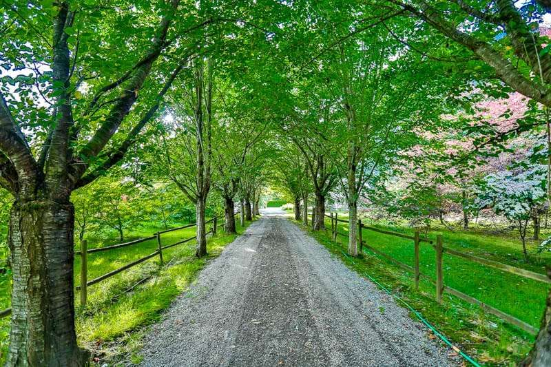 Main Photo: 37281 HAWKINS PICKLE ROAD in Mission: Dewdney Deroche House for sale : MLS®# R2079544