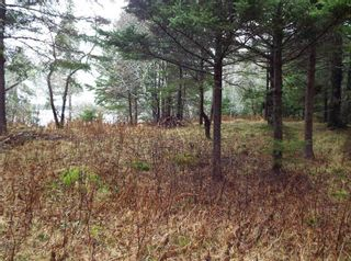 Photo 4: 331 Highway in Voglers Cove: 405-Lunenburg County Vacant Land for sale (South Shore)  : MLS®# 201601512