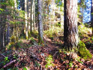 Photo 12: 2211 Ayum Rd in : Sk Saseenos House for sale (Sooke)  : MLS®# 862269