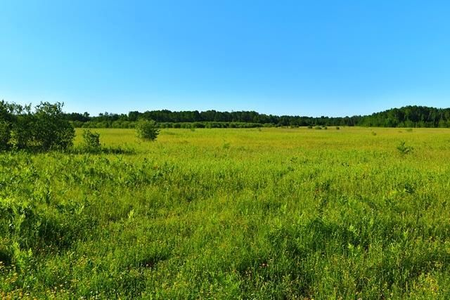 Main Photo: 0 10N Road in Sprague: Vacant Land for sale : MLS®# 202112232