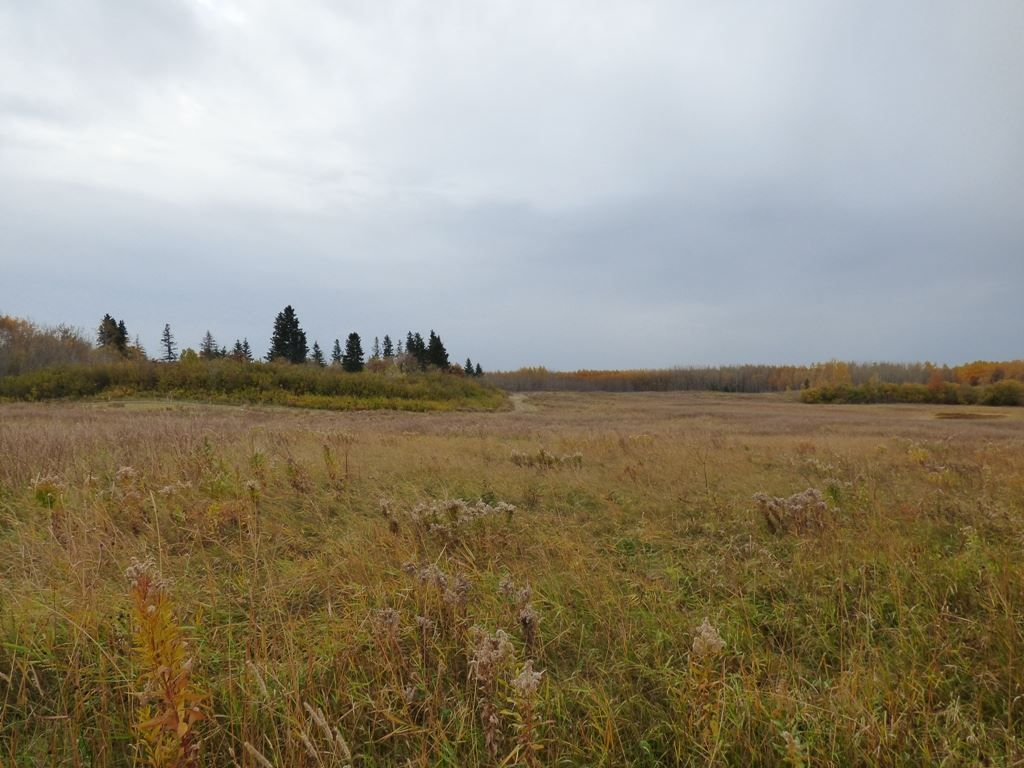 Photo 9: Photos: N1/2 SE19-57-1-W5: Rural Barrhead County Rural Land/Vacant Lot for sale : MLS®# E4217154