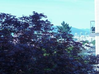 """Photo 14: 203 910 W 8TH Avenue in Vancouver: Fairview VW Condo for sale in """"THE RHAPSODY"""" (Vancouver West)  : MLS®# V765056"""
