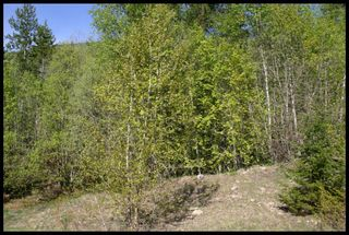 Photo 50: 21 6500 Southwest 15 Avenue in Salmon Arm: Panorama Ranch Vacant Land for sale : MLS®# 10230290