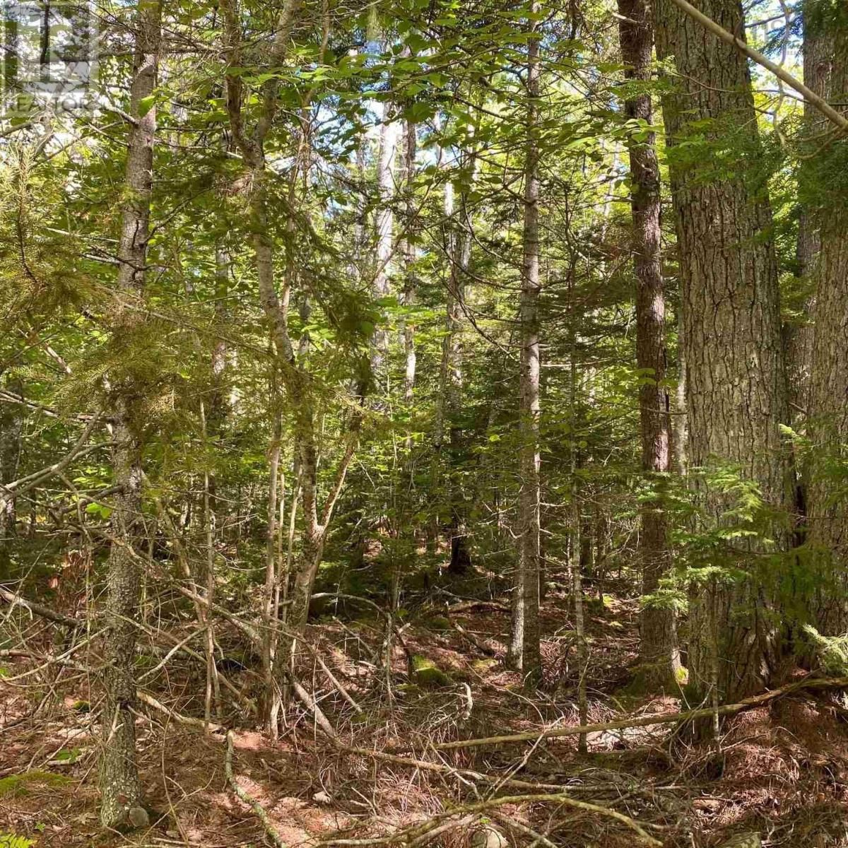 Main Photo: Lot 64 Forest Point Loop in Labelle: Vacant Land for sale : MLS®# 202125067