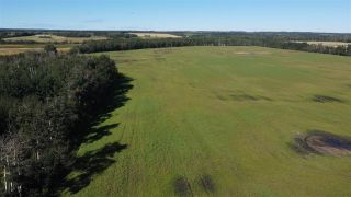 Photo 5: Twp 474 Hwy 795: Rural Wetaskiwin County Rural Land/Vacant Lot for sale : MLS®# E4211589