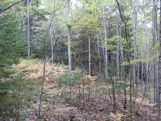 Photo 16: Tanner Hill Road in Limerock: 108-Rural Pictou County Vacant Land for sale (Northern Region)  : MLS®# 202121301