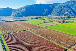 Photo 7: 4081 DIXON Road: Agri-Business for sale in Abbotsford: MLS®# C8035569