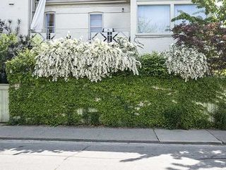 Photo 20: 197 Argyle Street in Toronto: Little Portugal House (3-Storey) for sale (Toronto C01)  : MLS®# C3660423