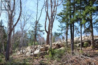 Photo 5: Lot Highway 3 in Summerville Centre: Vacant Land for sale : MLS®# 202109429