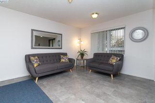 Photo 2: 104 3258 Alder St in VICTORIA: SE Quadra Condo for sale (Saanich East)  : MLS®# 774712