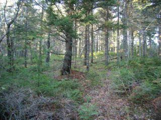 Photo 11: Hwy 3 Tusket Highway in Tusket: County Tusket- Hwy 308 Vacant Land for sale (Yarmouth)  : MLS®# 201726173